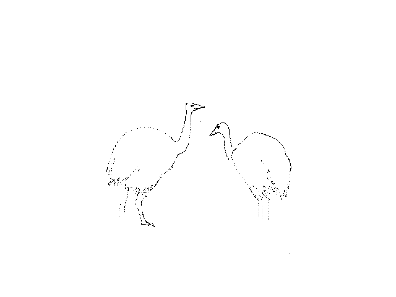 #1226 Two Ostriches