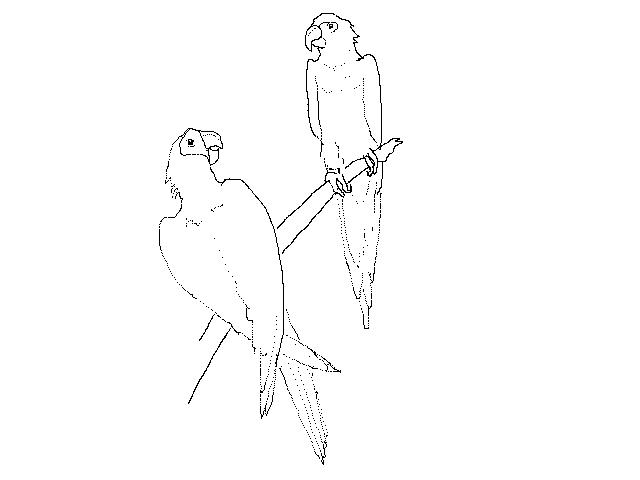 #1249 Two Parrots (Stuffed)