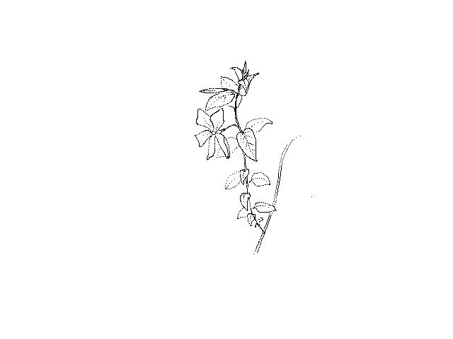 #1257 Small Blue Flower