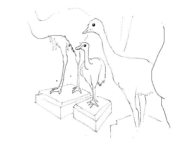 #1260 Emu Chicks, Stuffed 2