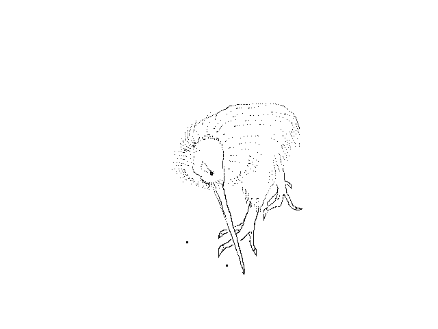 #1262 Kiwi, Stuffed